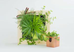 引っ越し祝いに観葉植物は無難なほうに属します